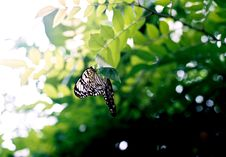 Free Black And White Butterfly On Brown Tree Branch Stock Image - 83078971