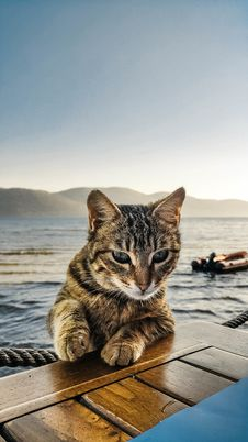 Free Black And White Tabby Cat Leaning On Brown Wooden Surface Beside Sea Stock Images - 83079344