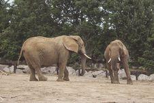 Free Elephants At The Zoo Royalty Free Stock Photos - 83079378