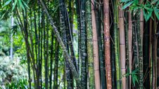 Free Green Leaf Bamboo Tree At Daytime Stock Image - 83079381