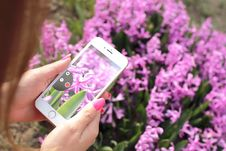 Free Photographing Flowers With Smartphone Royalty Free Stock Photo - 83079425