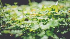 Free Green Leaf Plants Royalty Free Stock Photos - 83079628