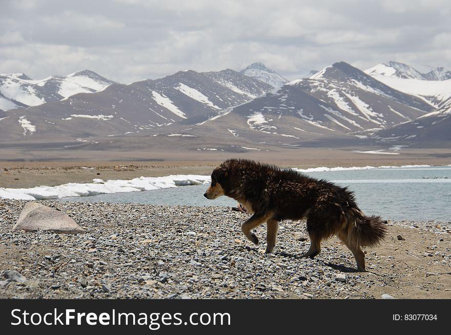 Black Coat Dog Walking in Front of Mountain during Daytime