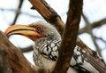 Free Bird In Tree Stock Photos - 8313633