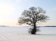 Free Winter Landscape Stock Photos - 8310583