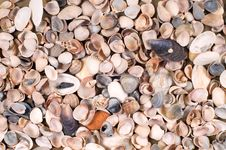 Free Shells Royalty Free Stock Images - 8311329
