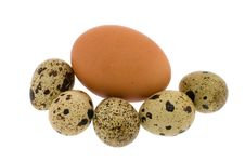 Free Crude Eggs Stock Photography - 8311342