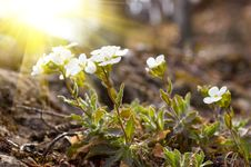 Free Spring Flowers Stock Images - 8311404