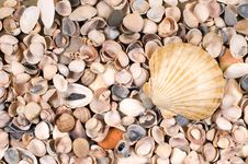 Free Shells Royalty Free Stock Images - 8311429