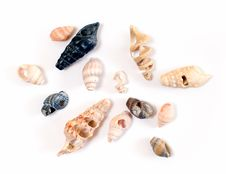 Free Shells Stock Image - 8311501