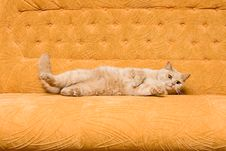 Free Cat On The Sofa Royalty Free Stock Images - 8312489