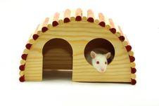 Free Rat Royalty Free Stock Photos - 8312518