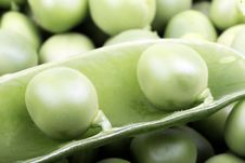 Free Green Peas Stock Images - 8313564