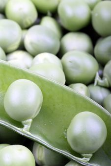 Free Green Pea Stock Photo - 8313900