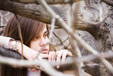 Free Young Beauty Between Branches Royalty Free Stock Photos - 8314048