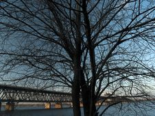 Free Lonely Tree And Bridge Stock Photos - 8314673