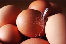 Free Eggs Stock Photos - 8315143