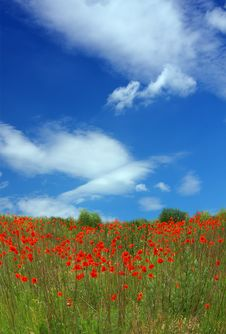 Red Poppies On Spring Meadow Stock Photos