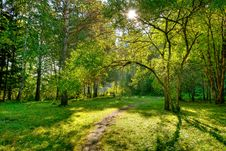 Free Morning In Forest Stock Photography - 8318022