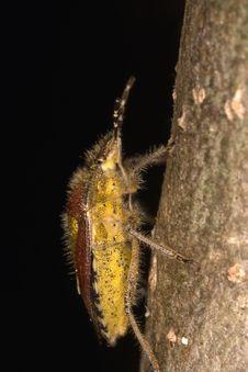 Free Climbing Stink Bug Stock Photography - 8318122