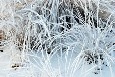 Free Frozen Plants Stock Photos - 8318183