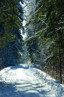 Free Winter Forest Royalty Free Stock Image - 8319146