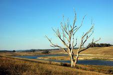 Free Barren Tree On A Field Stock Image - 8320921