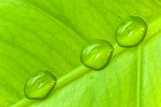 Free Green Sheet Background With Raindrops. Close Up Royalty Free Stock Images - 8321049