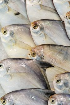 Free Marine Fish Royalty Free Stock Photography - 8322897