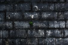 Free Brick Wall Stock Image - 8322921