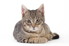 Free Striped Kitten, Isolated Stock Image - 8322971