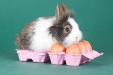 Free Spotted Bunny With Eggs Isolated Royalty Free Stock Image - 8323516