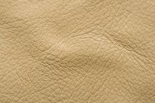 Free Orchi Leather Stock Image - 8324261