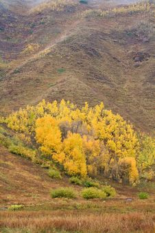 Free Aspen Trees In The Fall Stock Photo - 8325350