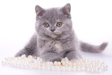 Free Little Kitty Stock Photos - 8326183