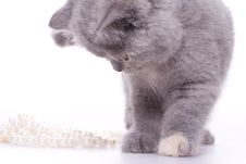Free Little Kitty Stock Image - 8326201