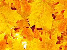 Leaves Autumn In Wood Royalty Free Stock Images