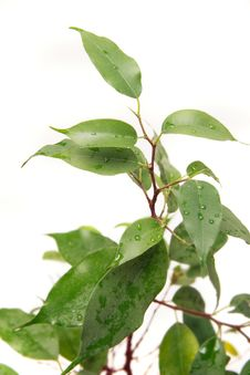 Free Green Plant Over White Stock Photo - 8327080
