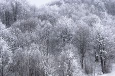 Free Forest In Winter Royalty Free Stock Photos - 8329248
