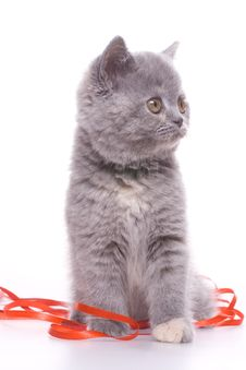 Free Little Kitty Royalty Free Stock Photography - 8329287