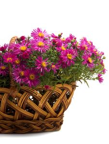Free Basket Of Flowers On A White Background Stock Photos - 8329753