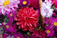 Free Basket Of Flowers Stock Photography - 8329812