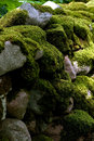 Free Rock Wall Under Moss Royalty Free Stock Photography - 8330507