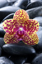Free Orchid Stock Images - 8330974