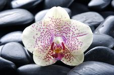 Free Orchid Stock Photography - 8330922