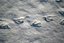 Free Duck Footprints Stock Images - 8331104