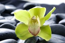Free Orchid Royalty Free Stock Photo - 8331125