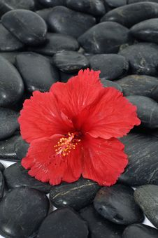 Free Red Flower Royalty Free Stock Image - 8331436