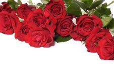 Free Rose Stock Photography - 8332442