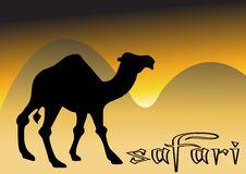 Free Camel In Desert Sunset Stock Photography - 8333122
